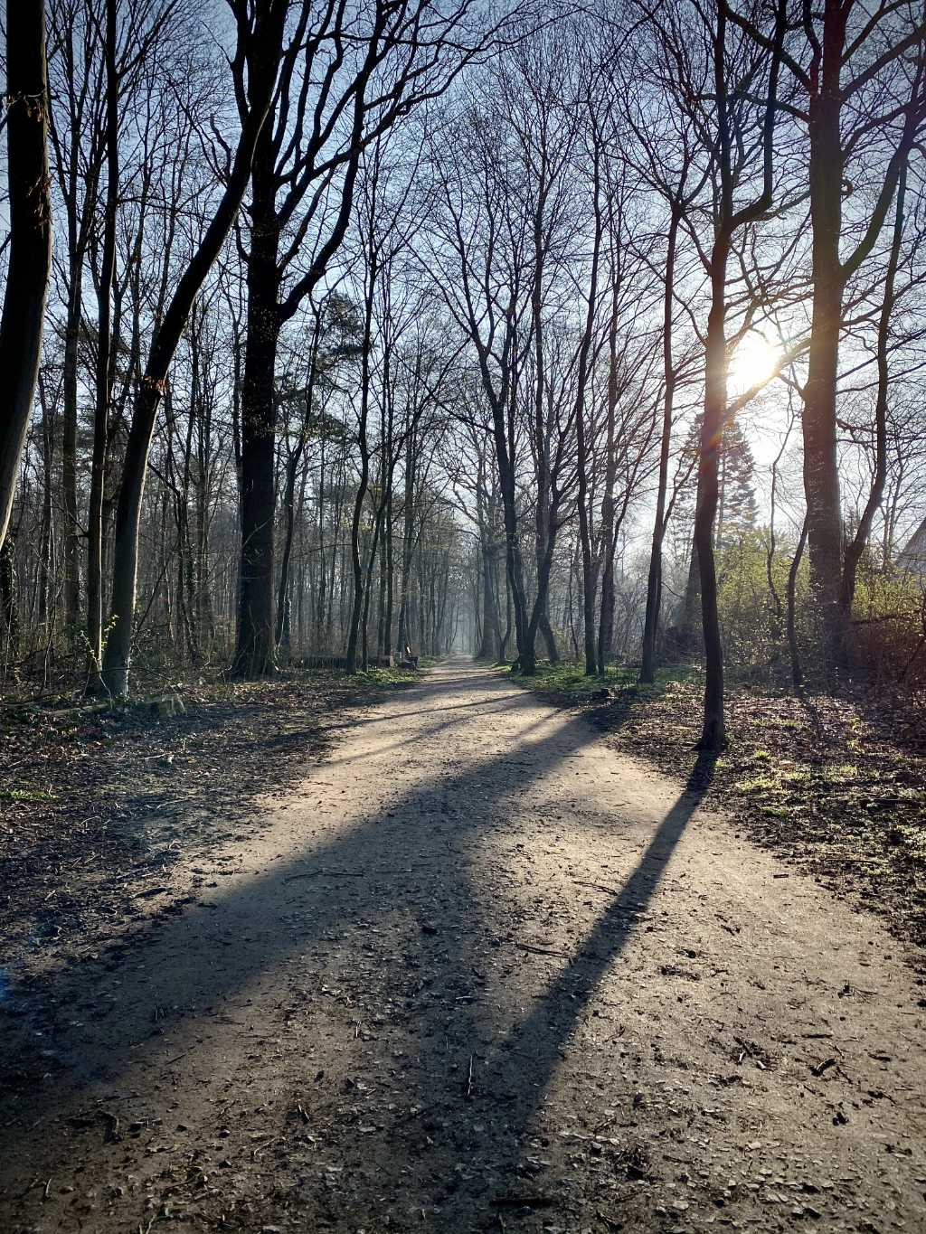 Photo of a path in our forest on a sunny spring day